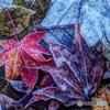 秋の切撮り43