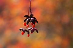 秋を味わう7