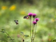 花と蝶22