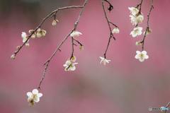 春の誘い4