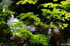 渓流の誘い6
