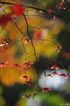 秋の切取り