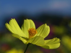 黄色のある風景5