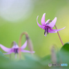 春の妖精6