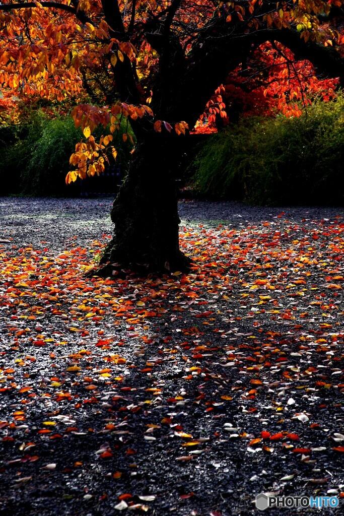 秋の切撮り31