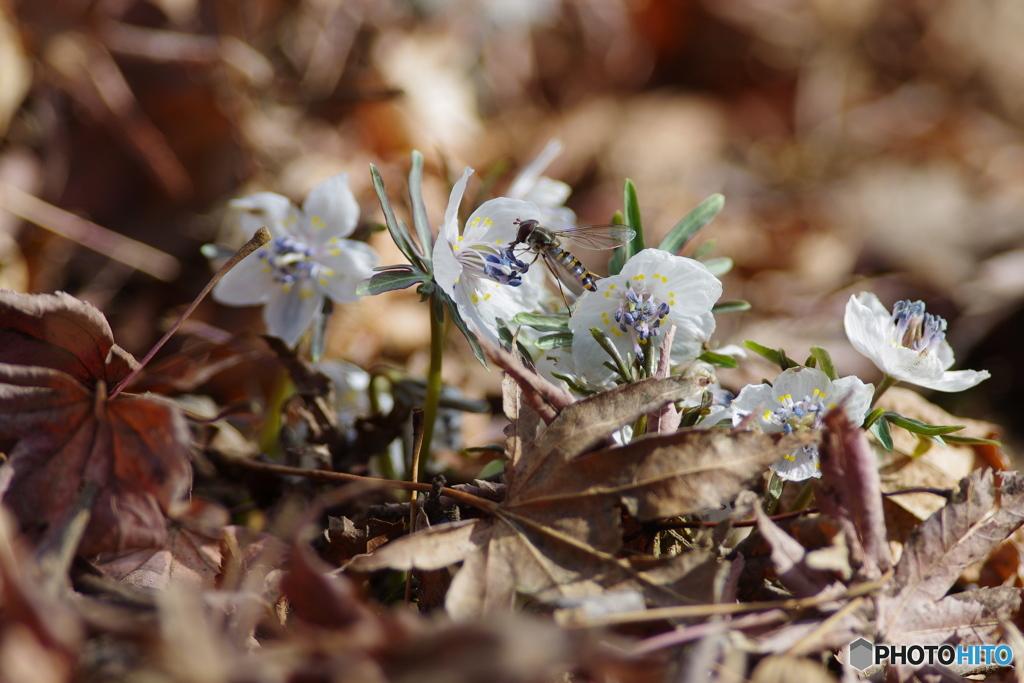 春の兆し3