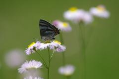 蝶の季節2