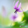 春の妖精10