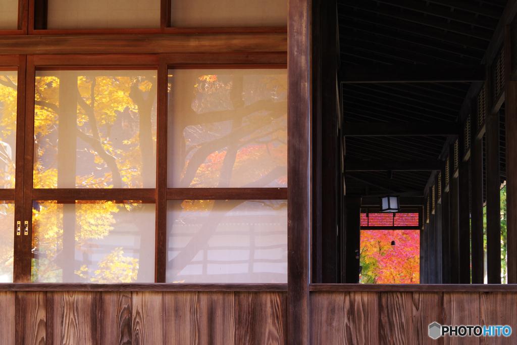 秋の切撮り33