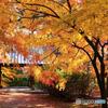 秋の切撮り32