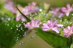 梅雨の晴れ間に3