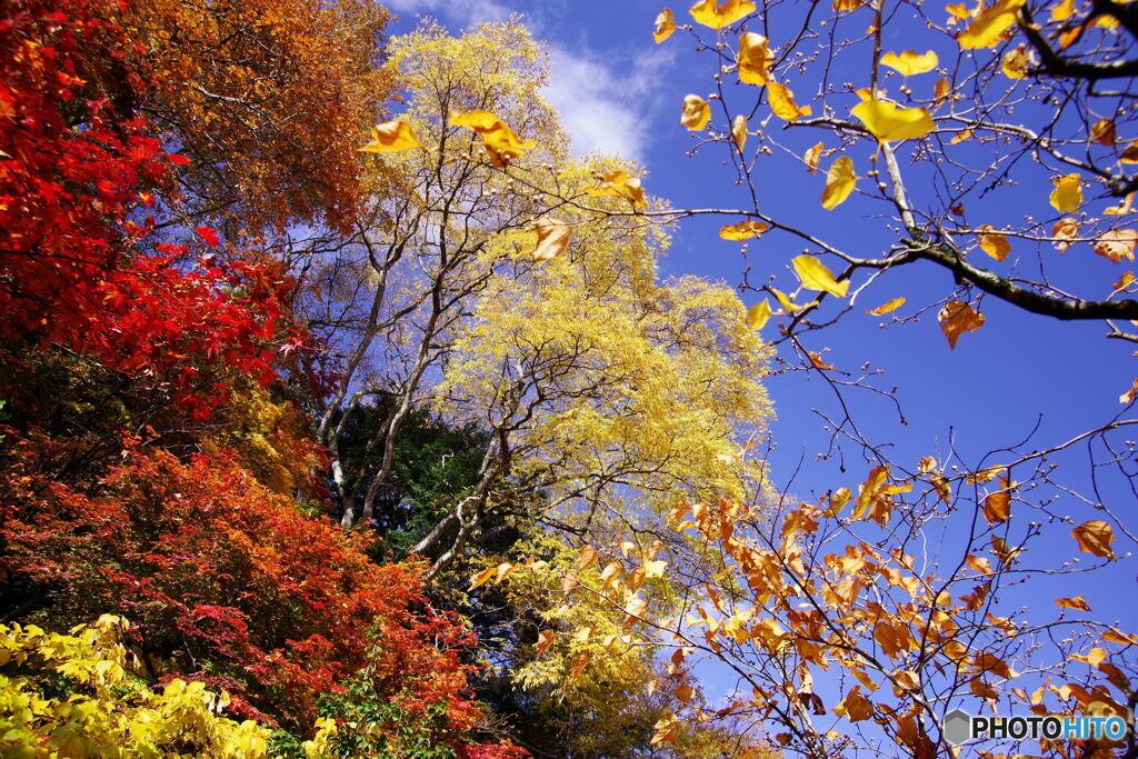 秋の切撮り19