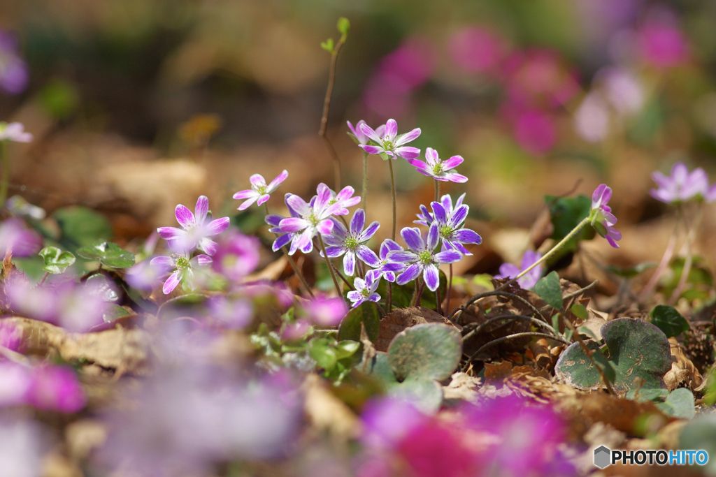 花は野のまま6