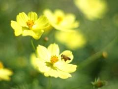 黄色のある風景3