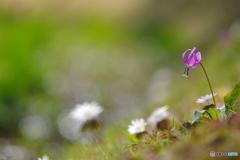 花は野のまま
