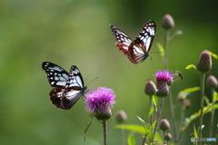 花と蝶20