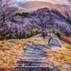 朝日の桜山