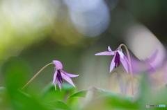 春の妖精達