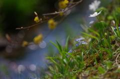 春の小川3
