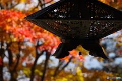 秋の切取り3