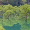 新緑と青い水面