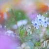 春だね~♪
