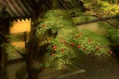 紅もみじの花