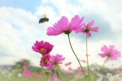 Bee happy♪