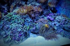 Finding Nemo♪