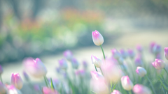 _pinkspot