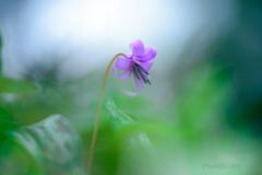 _spring ephemeral