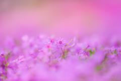 _pinkworld