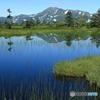 初夏の高層湿原