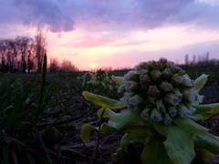 春の訪れ、沈む夕陽。