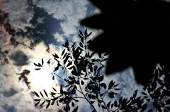 空と木陰と睡蓮と