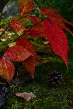 秋になったよ
