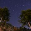 北斗七星と木々