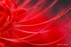 紅、溶ける。