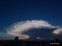 今日見た、巨大な「かなとこ雲」。