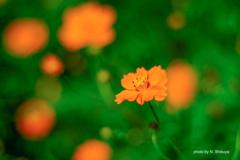 黄橙の園。