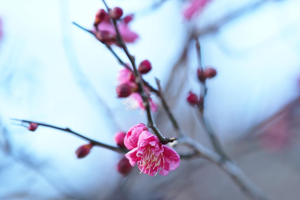 季節のたより 春を待つ