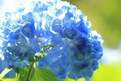 青空が恋しい季節だから