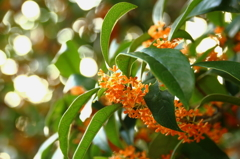 秋の香りvol.3