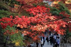 香嵐渓の紅葉狩り
