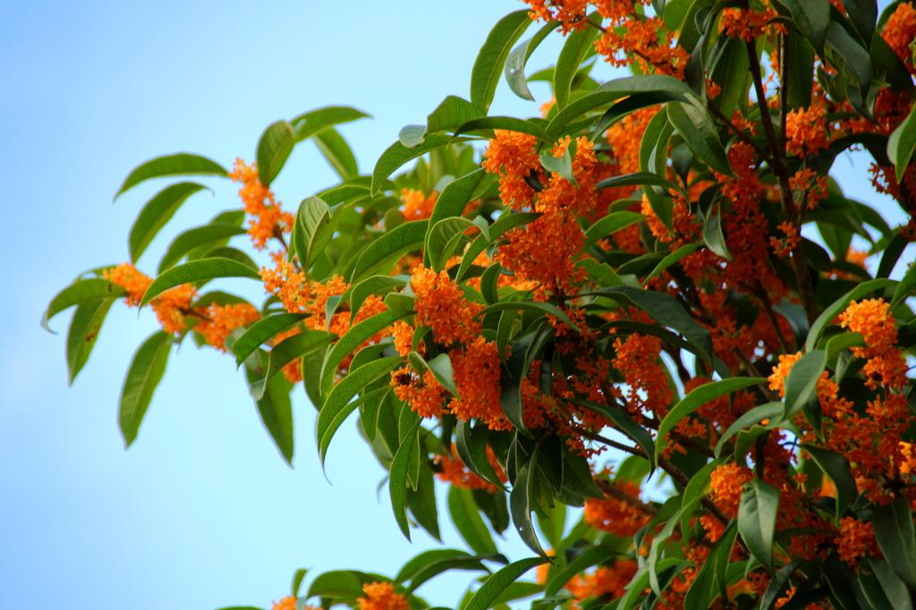 秋の香りvol.2