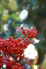 秋には赤い実がよく似合う