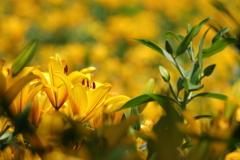 黄色と緑の世界