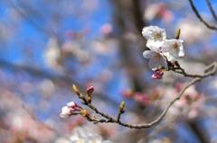 春よ、こい
