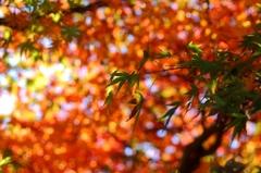 秋色に交わる緑