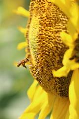 ぶんぶんぶん♪ハチが飛ぶ~♪